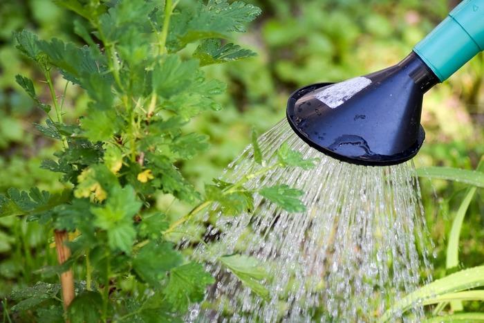 球根の植え付けが終わったらたっぷり水やりをします。気温が高いうちは、水やりのし過ぎにより腐ることがあるので気をつけましょう。  太陽が好きな品種、日陰を好む品種があるのでそれぞれの球根の生育に適した場所で育てましょう。  冬の間は、きれいな花を咲かせるためにしっかりと寒さに当てることも重要です。冬でも表面の土が乾いたらたっぷり水やりします。日々、観察してあげてください。
