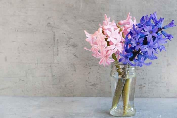 大きく育ったものは切り花としても楽しめます。色違いのヒヤシンスを飾るのもいいですね。