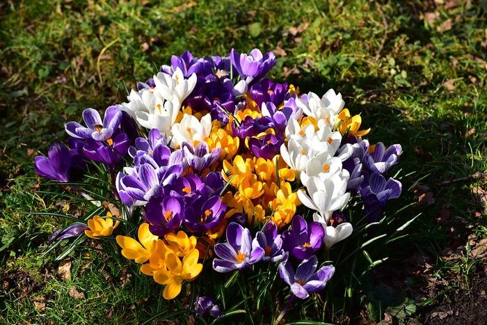 同じ品種を密集して植えるとまるでブーケ!小ぶりな花の場合、たくさん植えるのがかわいいですね。