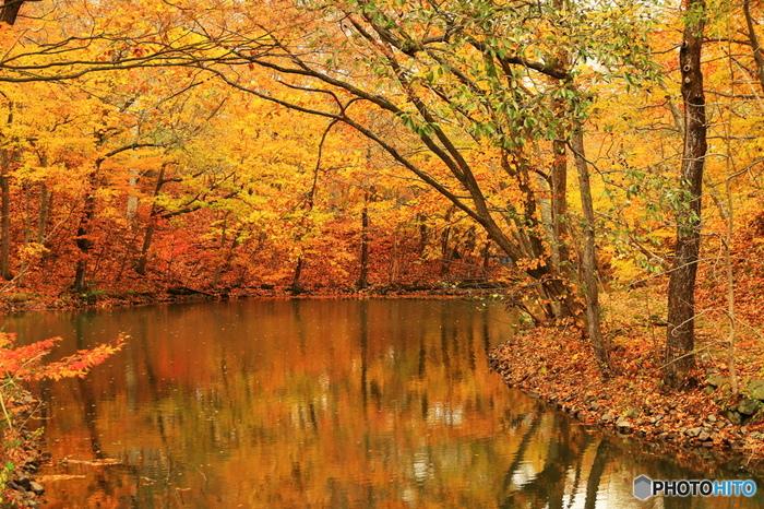 散策路にはこんな見事な紅葉も!幻想的な風景に心を奪われてしまいそうです。