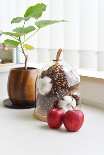 ガラスドームに松ぼっくりとクルミ、綿花を詰め込んで。雪をイメージさせる綿花と、リンゴのオーナメントやグリーンともよく合って、クリスマスらしいディスプレイに。