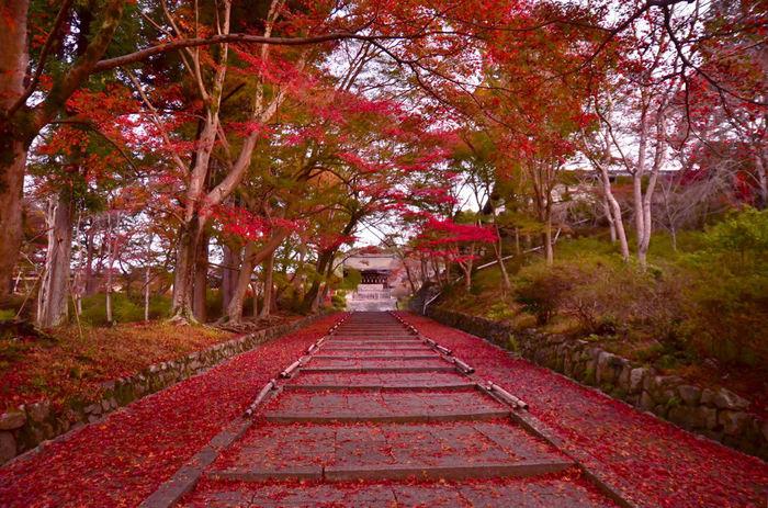 毘沙門堂の参道は、まるで赤い絨毯が敷き詰められた紅葉のトンネルのような姿となります。紅葉のトンネルをくぐりながら、赤い絨毯が敷かれた参道を登り、素晴らしい景色を見に行きませんか。