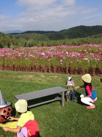 季節の花々に、パークゴルフやサイクリングなど、北海道の憩いの場として知られる国営滝野すずらん丘陵公園。