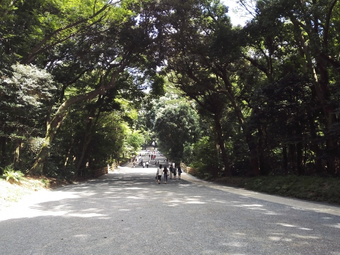 厳かな雰囲気はもちろん、なんといっても木漏れ日の中の道は森林の癒し効果たっぷり。 道を歩くだけでもワクワクしてきます。