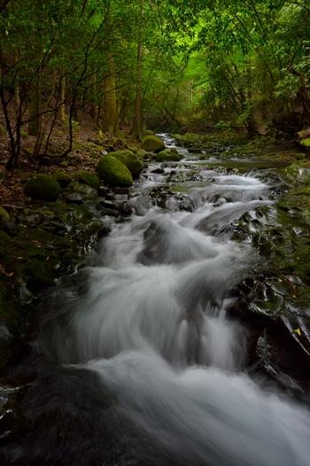かつては溶岩台地だった場所に流れる水。 水と溶岩、森のコントラストが魅力的な場所です。 天然記念物、太郎杉がある遊歩道も見もの。