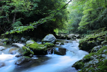 どこを歩いても森林浴を楽しめるスポットばかり。 案内板があるので、匹見峡の自然歩道コースを自由にゆっくり散策してみてはいかがでしょう。