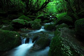 白谷雲水峡は、屋久島にある自然休養林。 「もののけ姫」のような世界観が広がる場所です。