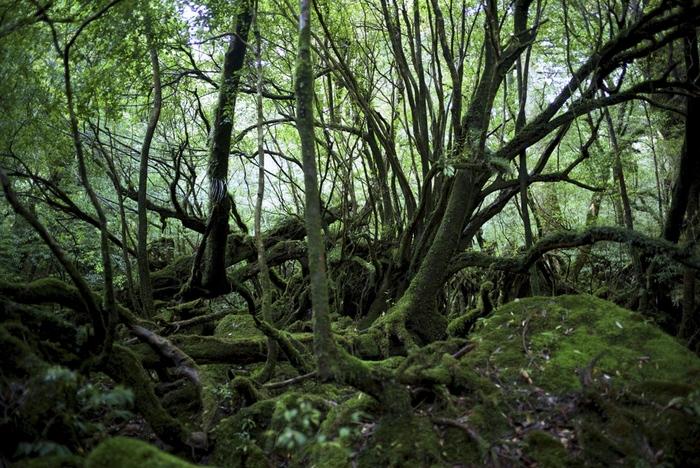 原生林に、3000年ほどの太古の昔から存在してきた弥生杉、他の森林浴スポットとは、また一線を画した体験ができます。