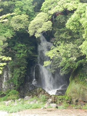 水と森林の癒しのスポット。 散歩コースが設けられており、歩きながら遊歩道を囲む森林を楽しめます。