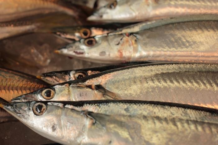 秋と言えば秋刀魚が美味しくなる季節です。旬の食べ物を楽しむのは何よりのごちそう。丸々と太って、新鮮な秋刀魚を見つけたら、秋刀魚料理を楽しみましょう。