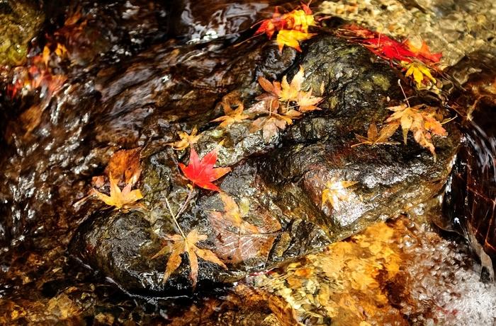 紅、赤、黄、朱色と彩った落ち葉が浮かぶ境内の池は、芸術品のように美しく、天然のガラスオブジェのようです。