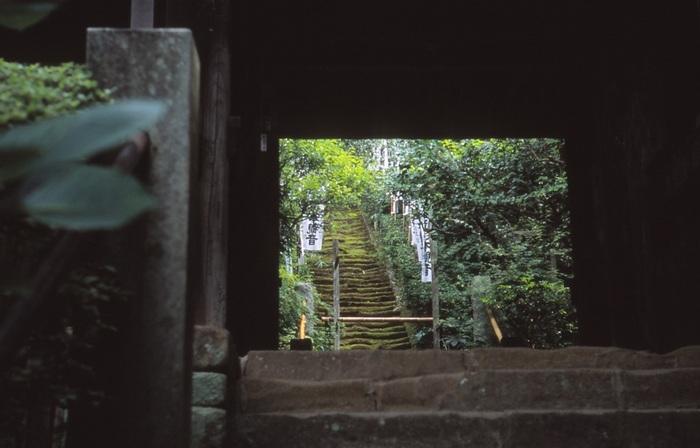 鎌倉は一日でも十分、満喫することができる見どころがぎゅっと集まった観光地です。今度のお休みに、ぜひ、思い出に残る鎌倉さんぽを楽しんでみてくださいね。