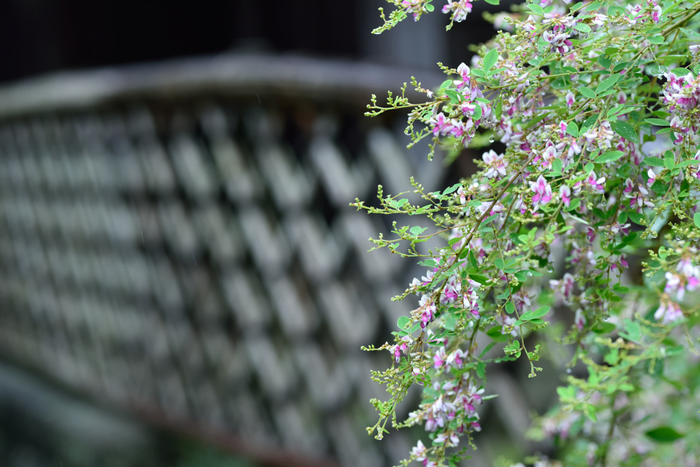 歴史的な名所が多く、風情ある佇まいが素敵な鎌倉は秋のお散歩におすすめのスポットです。紅葉の見ごろとなる晩秋は混雑することも多い鎌倉。秋のはじめは人も少なく、快適にお散歩することができるんです。萩や彼岸花など秋のお花を眺めつつ、心地よい小旅行を楽しんでみましょう。