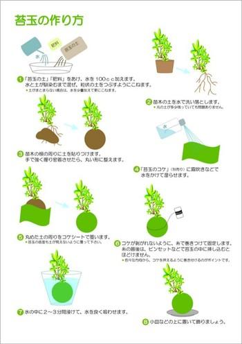 作り方は意外と簡単で、植物の根を苔玉の土で包み、重心が下のほうにきて安定するように丸く整えてから湿らせた苔玉のコケを巻き付けます。糸を巻いて剥がれないように固定したら全体を水につけて洗います。