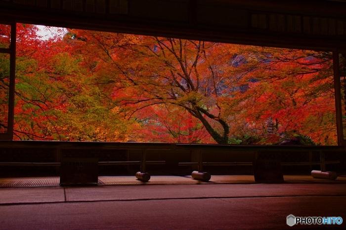宝厳院書院から眺める庭園の美しさは格別です。鮮やかに彩った樹々と、書院の木枠が融和し、書院から庭園を眺めていると、一枚の大きな絵画を鑑賞しているかのような錯覚を感じます。