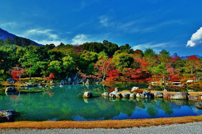 約950平方メートルにも及ぶ天龍寺境内の紅葉の美しさは傑出しています。カエデ、ハナミズキ、サクラツツジ、ドウダンツツジといった落葉樹の樹々が鮮やかに彩り、大方丈から眺める曹源池の美しさを引き立てています。