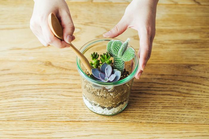 7.その他の植物もバランスを見て、配置していきます。基本は大きなものから植えていきますが、背の高い植物はガラスの側面に寄りかからせるように配置すると、バランスが取りやすいです。