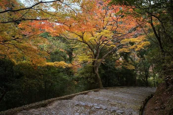 時間に余裕があれば、ぜひ、嵐山公園の亀山地区まで足を延ばし、展望台へ立ち寄ってみましょう。
