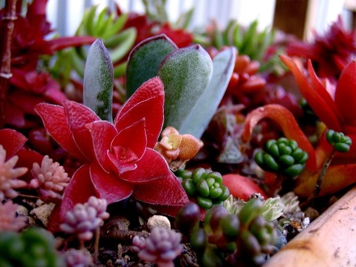 ぷくぷく可愛い『多肉植物の世界』♪育て方・増やし方の「基礎知識」&アレンジ実例