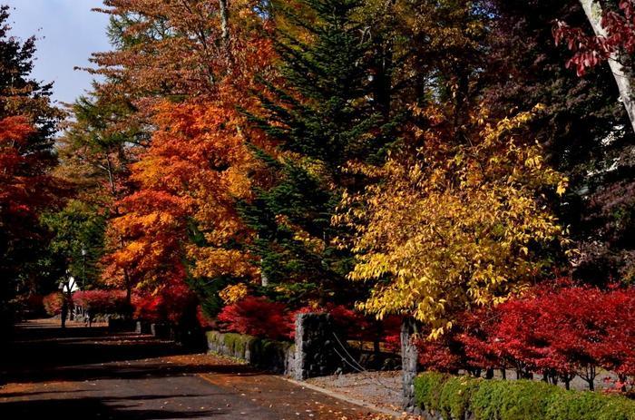 新緑の頃もさわやかで人気がありますが、紅葉の時期も素敵。そんな、歴史や自然、美味しいものがたくさんある魅力的な旧軽井沢の訪れてみたいスポットの紹介です。