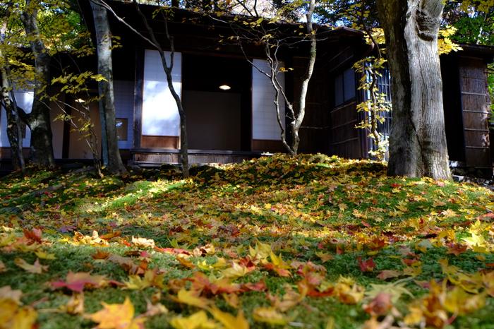 苔に落ち葉がかかる秋の終わりの庭も、しっとりとした情緒があり、ひとりで静かな時間を過ごすのに最適かも。