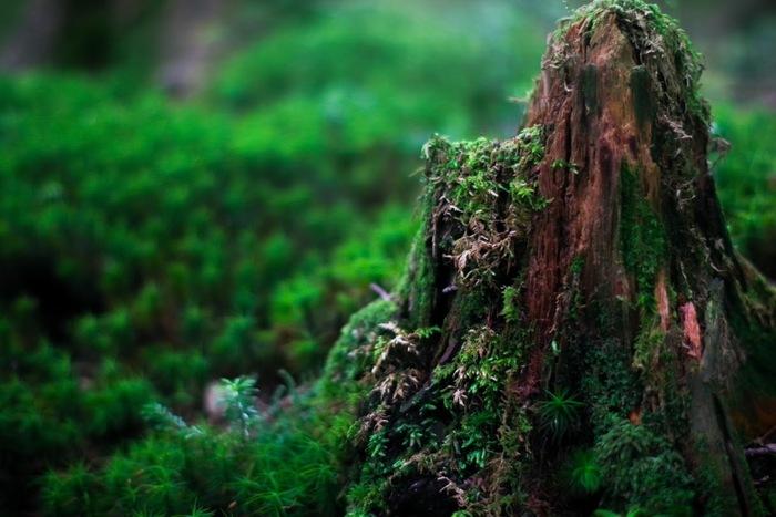 全国でも有数の森林浴スポット、1度は訪れてみたいですね。 他にも素敵なスポットはたくさんあるので、身近なところから探してみるのも良いかもしれません。 しばし日常を忘れて、森林浴を楽しみましょう。