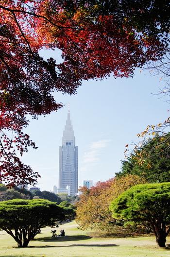 日本庭園、イギリス風景式庭園、フランス式整形庭園などからなる東京を代表する庭園「新宿御苑」。都会の真ん中にこんなにも広大な庭園があるなんて、と行くたびにびっくりしてしまう人も多いはずです*