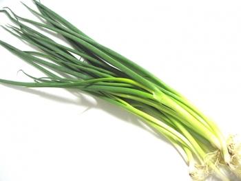 葉ネギは薬味としてちょくちょく使うので、キッチン近くにあるととっても便利♪収穫するとき、土から5センチほど残して収穫すると、また生えてくるのも嬉しいですね。  ■種まき・収穫■種まきは9月末まで、約60日で収穫できます。