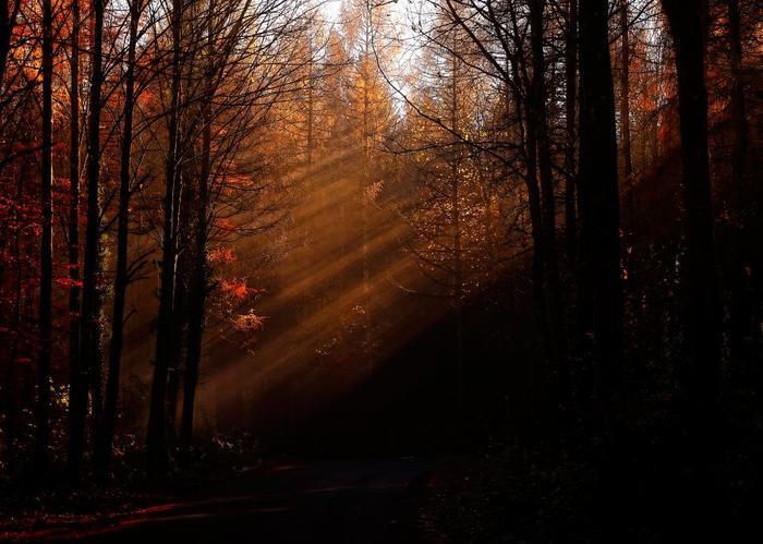 紅葉が美しく色づき始める秋は、芸術的なものに触れたくなる季節ですよね。