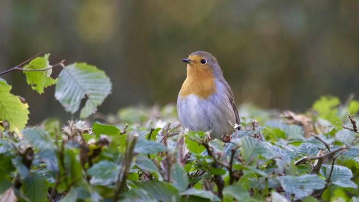 小鳥のさえずりのような優しいスカルラッティのソナタ。軽い気持ちで聴けるので、クラシックを普段あまり聴かないという方にもおすすめです。