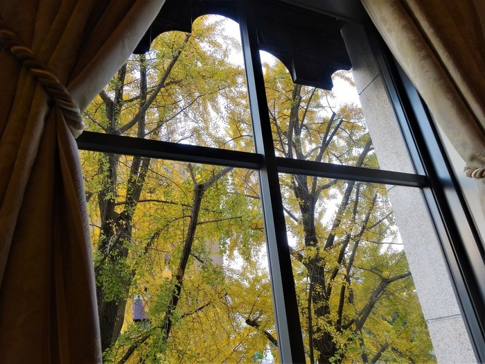 落ち着いた雰囲気の中、窓を覗くと神奈川県庁や日本大通りの銀杏並木が見え、季節の移ろいを感じることができます。