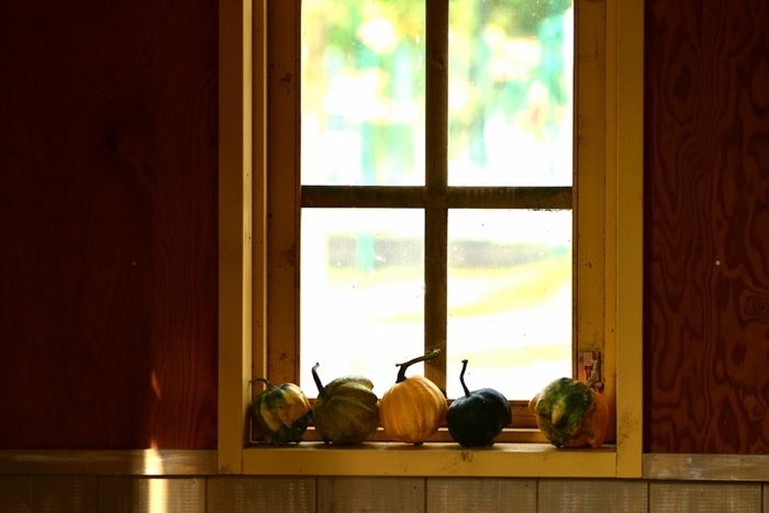 ハロウィンパーティーを開く予定がなくても、自宅にいながらにしてほんのりハロウィン気分が味わえる飾りつけをしてみましょう。  小さな変わりカボチャを窓辺に並べて、ほんのりハロウィン気分。ナチュラルなインテリアが好きな方にもおすすめです。
