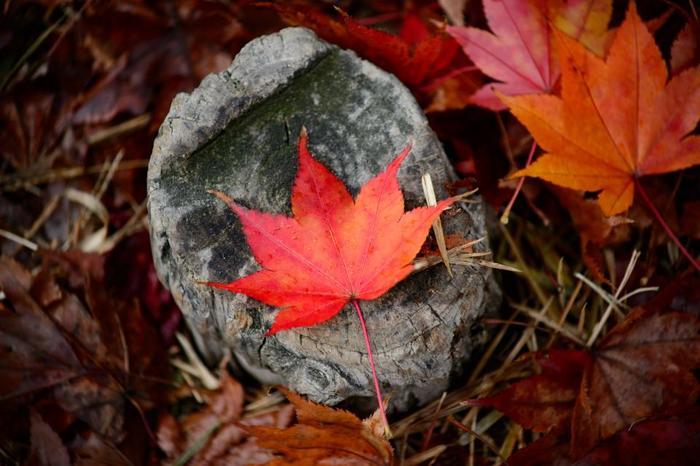 秋のお散歩に、都内の庭園巡りはいかがでしょうか。きっと日本の美しさを再発見できるはずですよ*