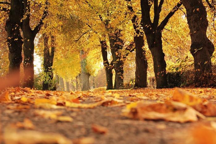 お散歩にぴったりの季節がやって来ました*今年の秋は、東京都内で庭園巡りなんていかがでしょうか?1度は訪れてみたい、4つの美しい庭園をご紹介していきます!