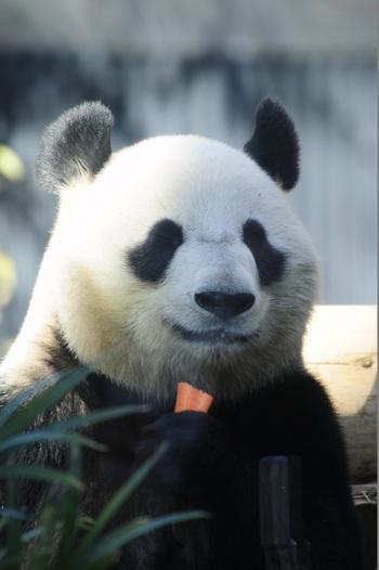 赤ちゃんパンダが誕生して注目が集まる上野動物園。もちろん、パンダ以外にもかわいい動物がいっぱいです♪秋のお出かけにぜひ上野動物園と、かわいいパンダグルメを楽しんでみませんか?