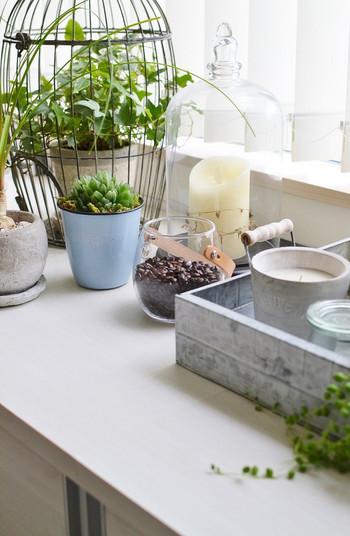 ベランダを始め、室内にはグリーンが。植物の取り入れ方も見習いたいポイントです。