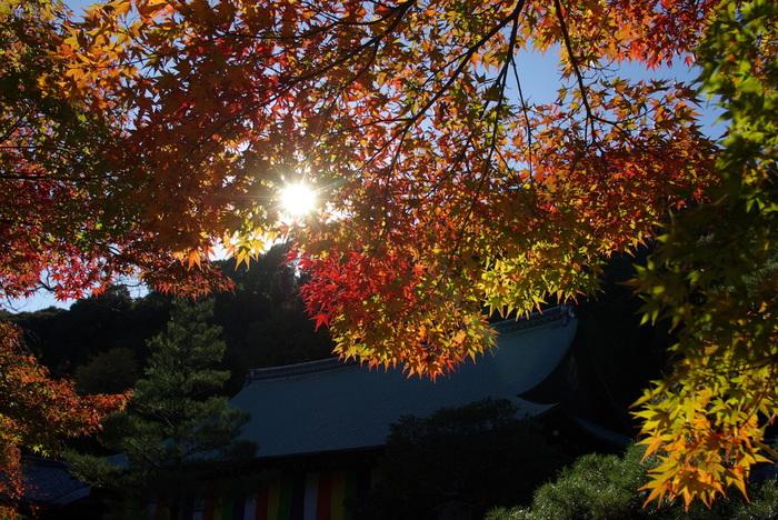 百人一首で有名な小倉山麓に佇む二尊院は、嵯峨天皇の勅命によって834年に創建された寺院です。晩秋になると、モミジが鮮やかに彩り、紅葉見物に大勢の人々が参拝に訪れます。