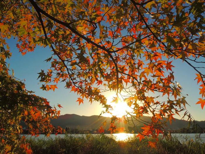 西行法師、松尾芭蕉といった歌人や俳人の歌にも詠まれている広沢池で観る夕暮れの美しさは格別です。沈みゆく夕陽、陽射しを浴びて輝く水面、紅に染まったモミジが織りなす景色は、浮世絵のような素晴らしさです。