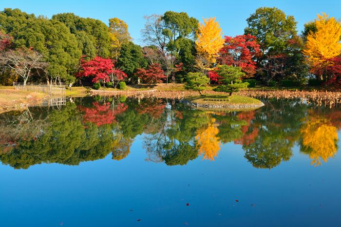 大覚寺境内にある大沢池が、紅、朱色、黄色と彩ったカラフルな樹々を鏡のように映し出す様は、いつまで眺めていても飽きることがありません。