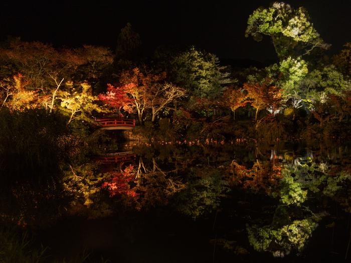 夜間特別拝観の時期になると、大覚寺境内は夜になるとライトアップが行なわれます。灯に照らされた色とりどりの樹々が暗闇に浮かび上がる様は幻想的で、幽玄とした雰囲気が漂います。