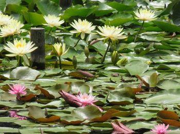 蓮池や菖蒲田では、四季折々の風情が感じられるのも明治神宮の魅力。 特に蓮池の景色は清清しく森林浴にぴったりです。