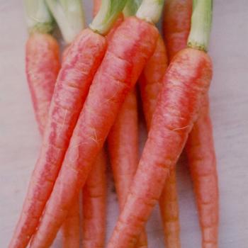 ニンジンの野菜粉を使用して作られたねんど。ニンジン特有のふんわりとした野菜の香りとやわらかな色合いは、ニンジン嫌いな子供でも喜んで使ってくれそう。