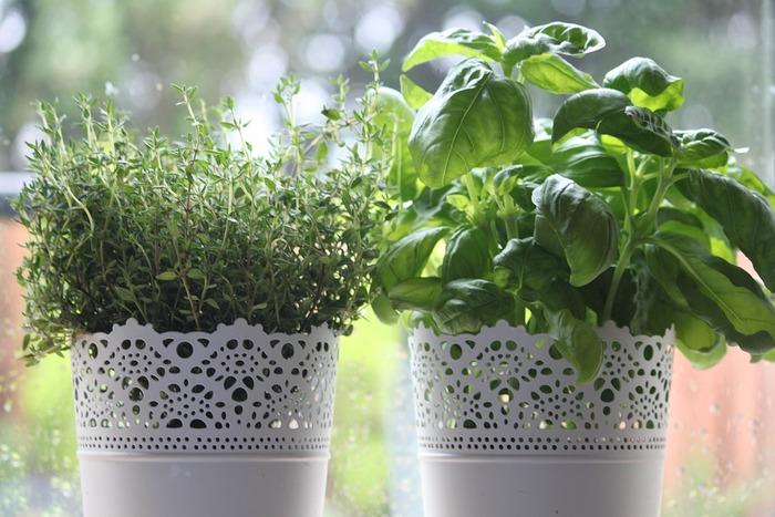 秋から冬にかけて育てるのに適した野菜やハーブは、低温に強い品種になります。年に2回、春と秋に植え付けができる品種は秋のほうが育てやすいといわれているくらい。