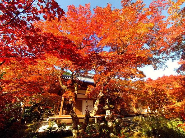 紅葉が見頃を迎える晩秋の常寂光寺の美しさは息を呑むほどです。燃え盛る炎のように深紅に染まった樹々と、美しい庭園が織りなす様は、まるで一枚の絵葉書のようです。