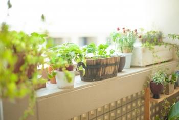 窓辺においた小さな鉢やベランダのコンテナでも、ハーブや野菜を育てることができます♪自分の手で育てる野菜は、無農薬で新鮮!食べるまでグリーンとして楽しむこともできますよね。秋からはじめる「ちょこっとガーデニング」はじめてみませんか?