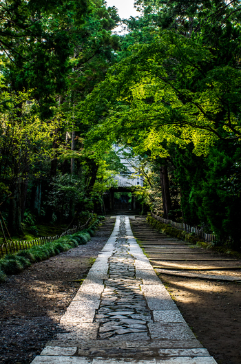 鎌倉一美しいとされるまっすぐに伸びた石畳は、古から続く静かな時を感じさせてくれます。木漏れ日が石畳をやさしく照らします。