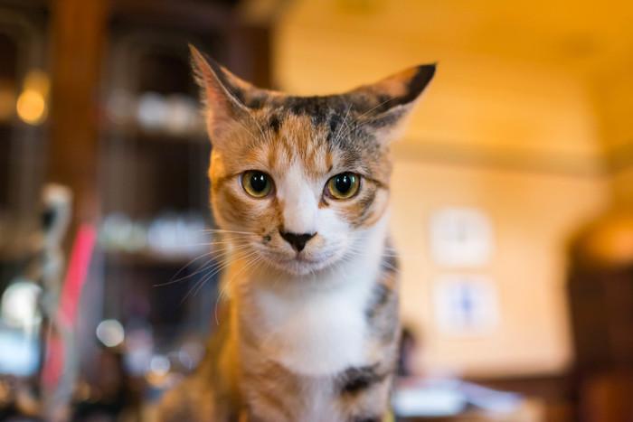 夏目漱石の処女作であり、代表作の1つ。「吾輩は猫である。名前はまだ無い」から始まる物語。一匹の「飼い猫」の目を通して、人間たちの心模様を洒落っ気たっぷりに描いています。