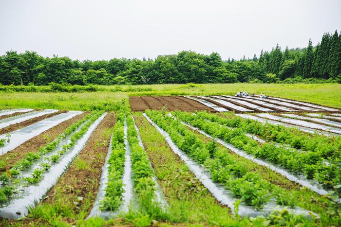 全部で約3万㎡の広大な畑。ヨモギ以外にも、さまざまな植物が栽培されているんです