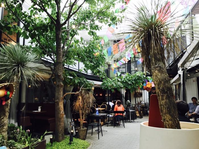 オシャレなカフェやミュージックバーはもちろん、120種類以上のおもしろい植物を眺めながら歩くのも◎
