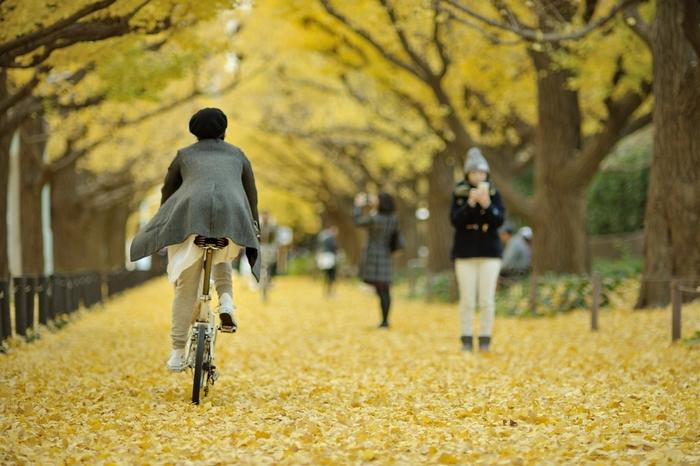 秋が深まってくるとポタリングコースとしてとってもおすすめなのが神宮外苑。銀杏並木は息を飲むほどの美しさです。